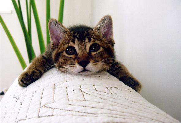 とよた真帆『もふもふ猫まみれ』
