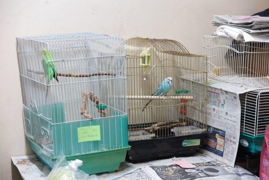 保護されている小鳥