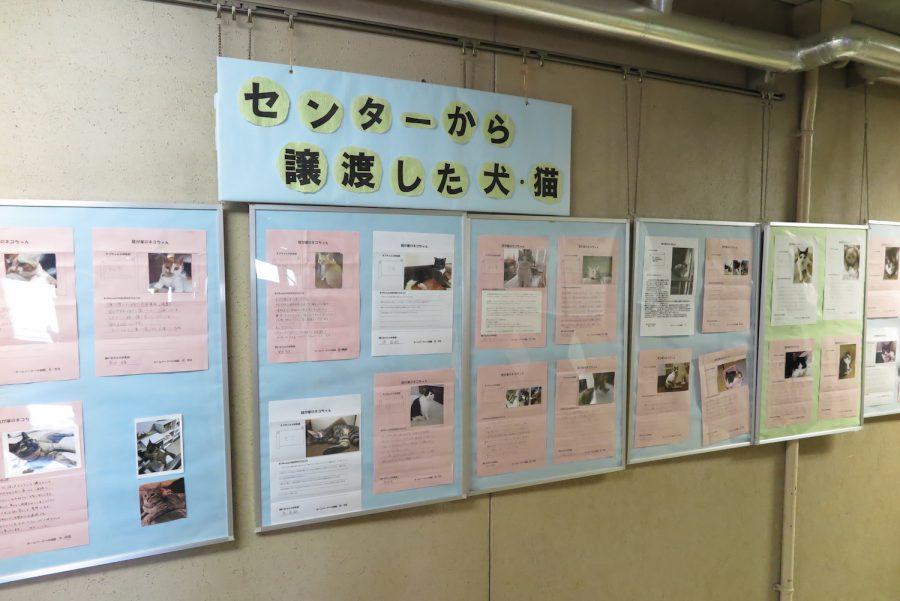 神奈川動物保護センターの掲示板