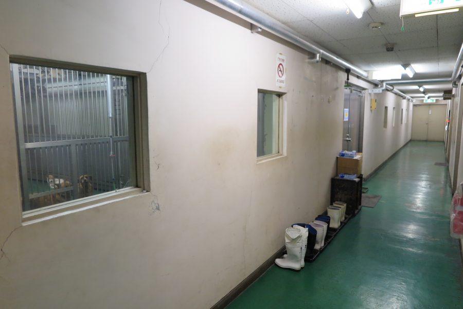 犬の収容所の廊下