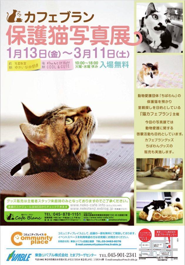 カフェブラン 保護猫写真展