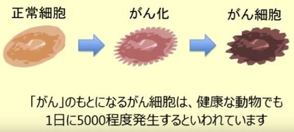 正常細胞ががん細胞になる過程のイラスト