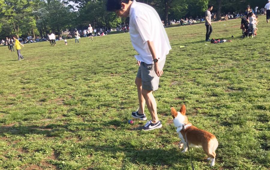 犬とお出かけして遊ぶ犬