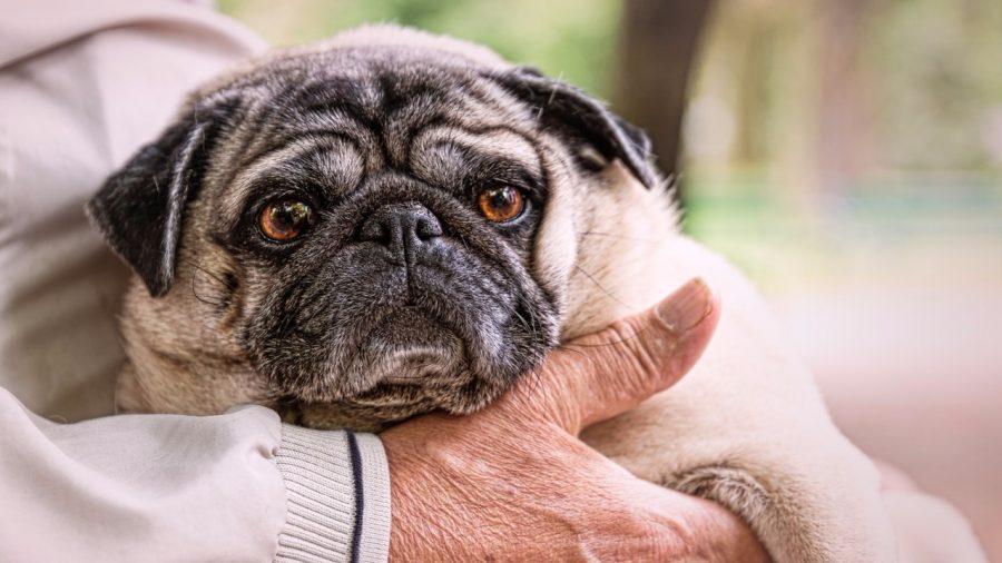 犬と高齢者