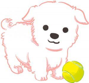 白い犬とテニスボール