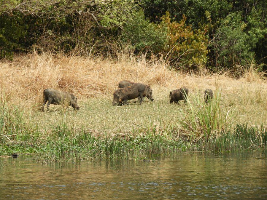 アフリカ9カ国縦断記で出会ったフンバご一家
