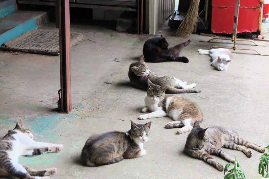 猫のたまり場「阿部ツ商店」