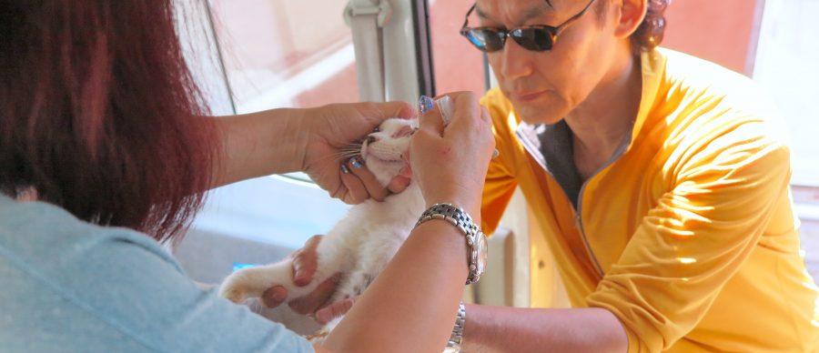 猫に目薬を入れるクレス先生と田中さん