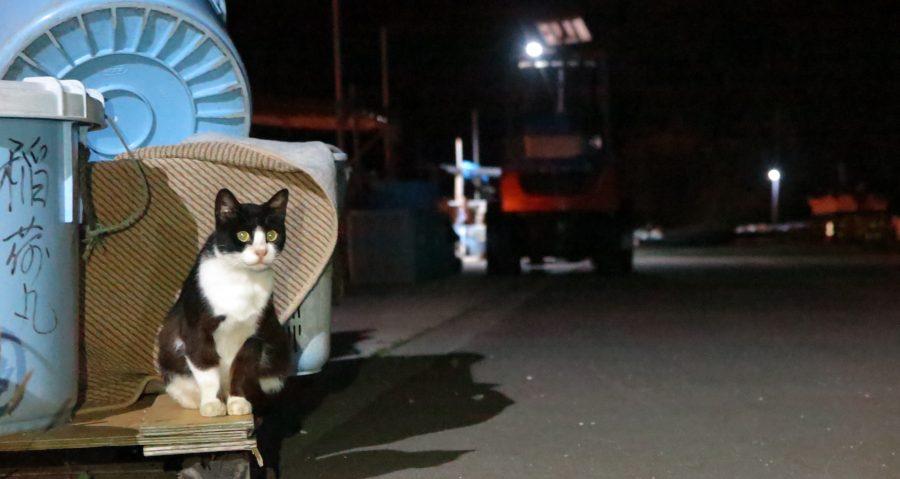 深夜の仁斗田港にいた猫