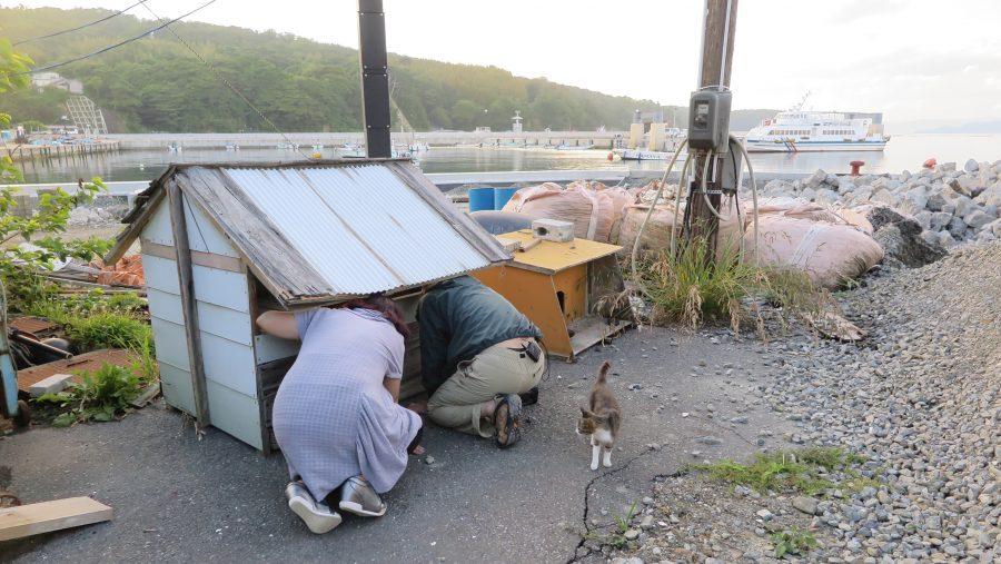 クレス先生と田中さんが猫の小屋をのぞく様子