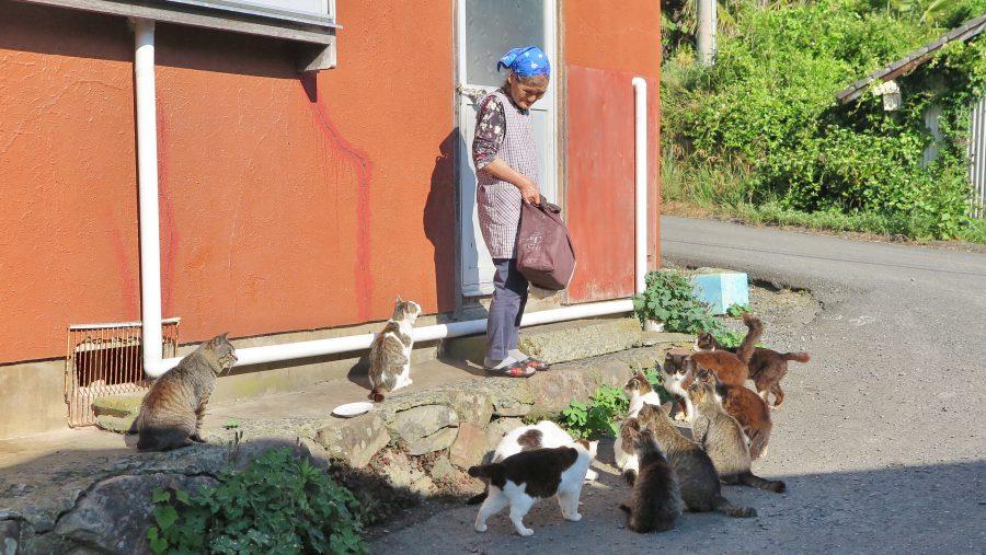 ご飯をおねだりする猫とおばあちゃん