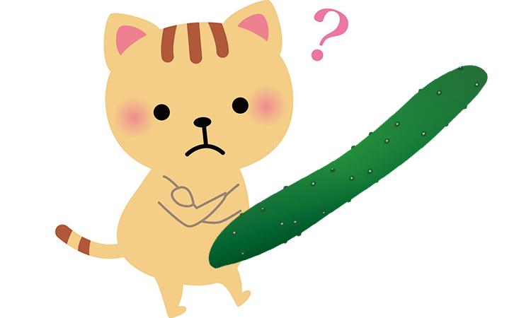 猫ときゅうり