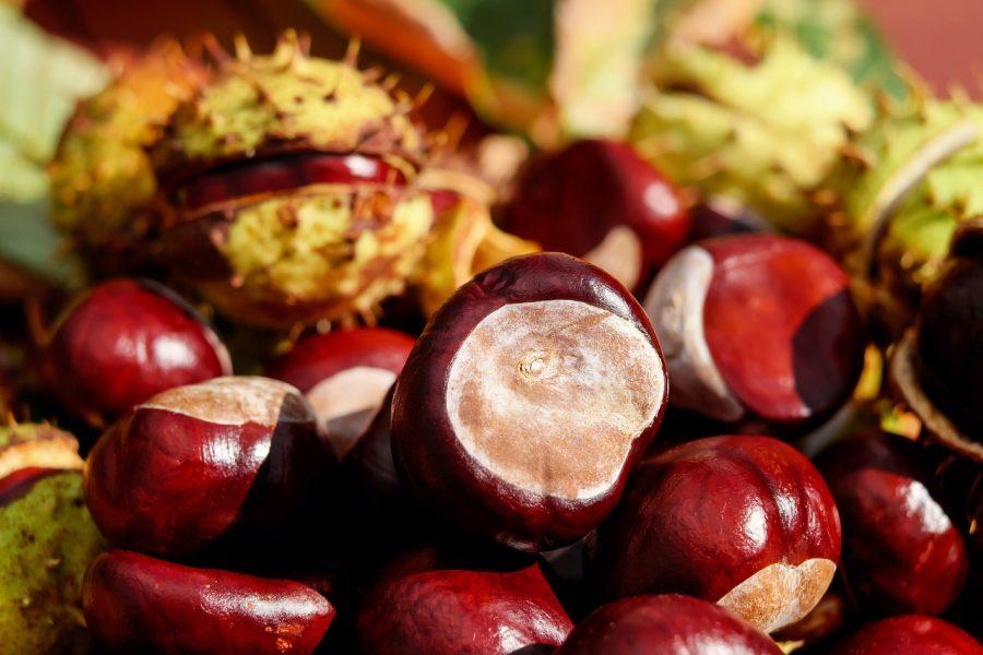 犬が食べても良い秋の食材である栗
