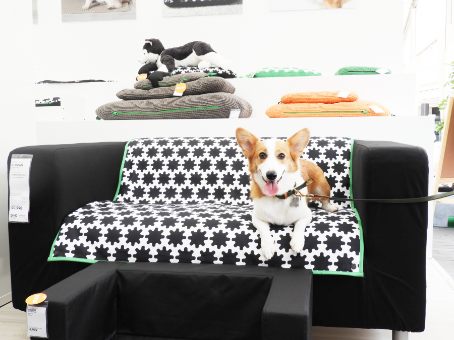 IKEAのペット用品シリーズ「ルールヴィグ」のソファカバーとコルク