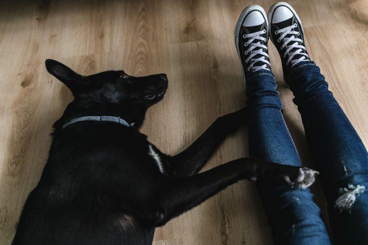 横になる犬と人の足