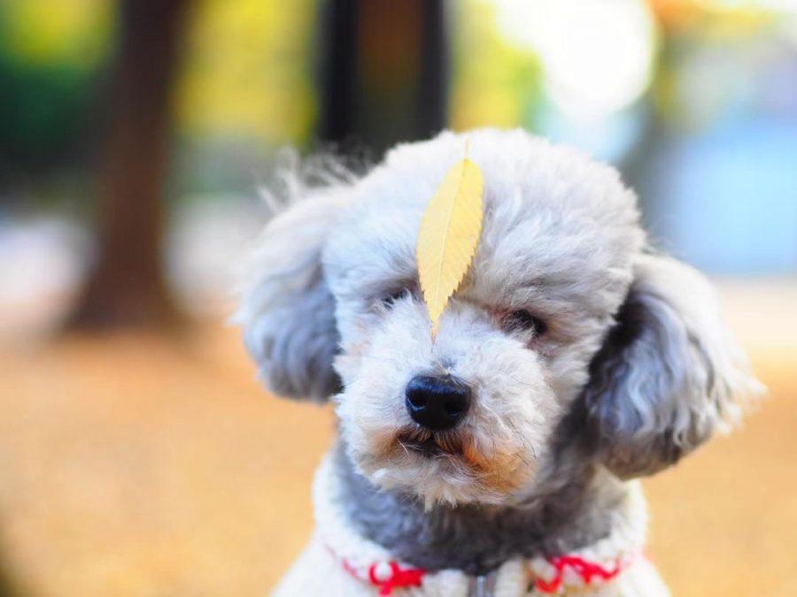 犬と秋に行きたい紅葉が楽しめるお出かけスポット