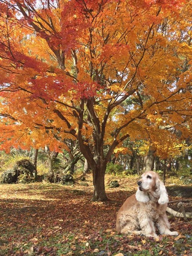 犬と秋に行きたい紅葉が楽しめるお出かけスポットの山梨県の本栖湖