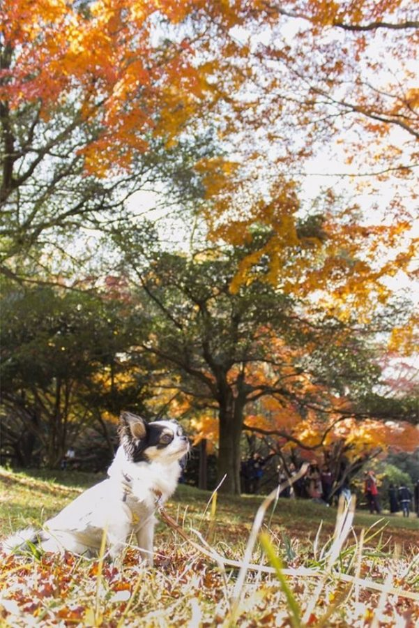 犬と秋に行きたい紅葉が楽しめるお出かけスポット東京都にある昭和記念公園