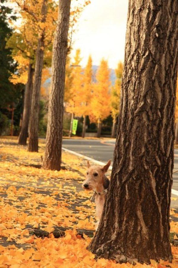 犬と秋に行きたい紅葉が楽しめるお出かけスポットの静岡県の駿河平自然公園