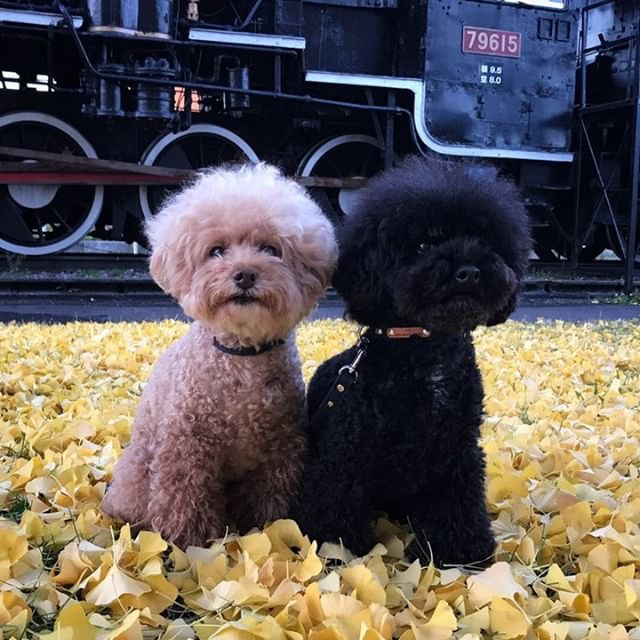 犬と秋に行きたい紅葉が楽しめるお出かけスポット北海道倶知安町の文化福祉センター