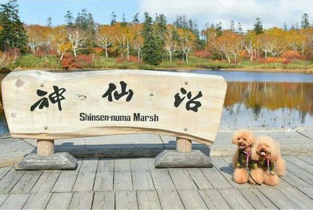犬と秋に行きたい紅葉が楽しめるお出かけスポット北海道にある神仙沼