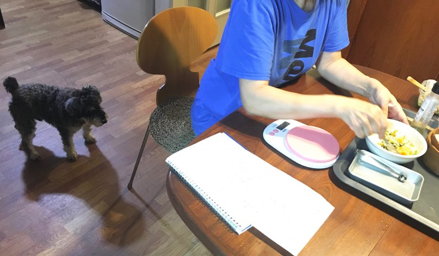 犬用の手作りご飯を待つ元保護犬のシルバ