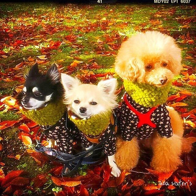 犬と秋の画像集