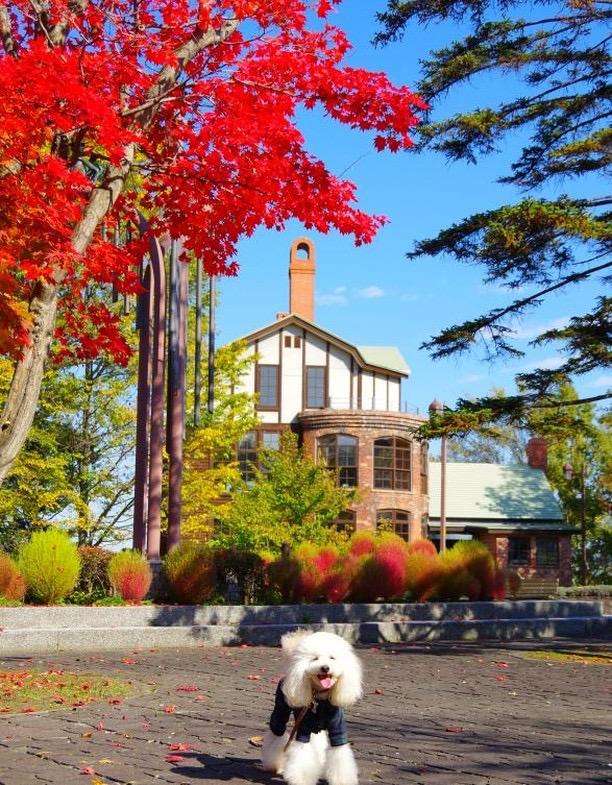 犬と秋に行きたい紅葉が楽しめるお出かけスポット北海道江別市にあるガラス工芸館