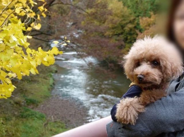 犬と秋に行きたい紅葉が楽しめるお出かけスポット東京都にある秋川渓谷