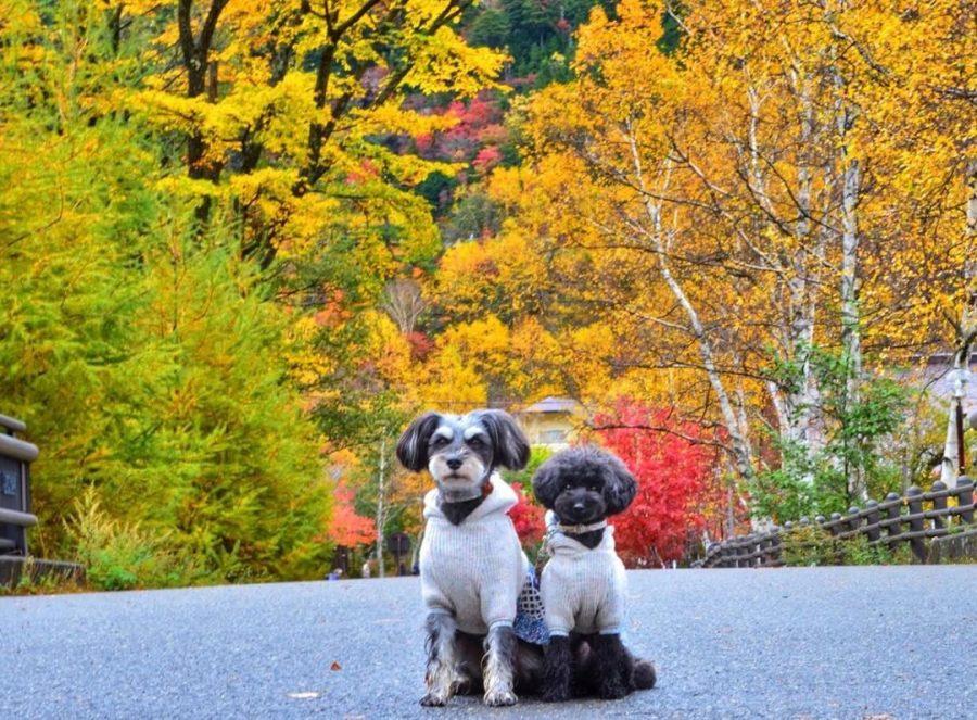 犬と秋に行きたい紅葉が楽しめるお出かけスポットの栃木県の日光