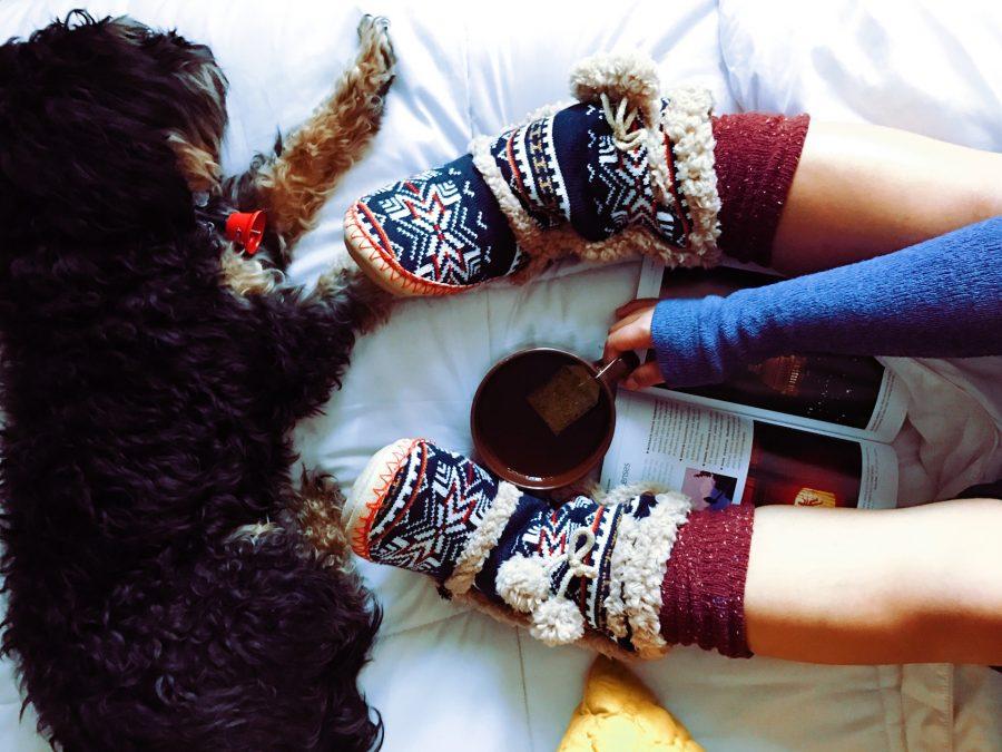 犬と一緒に読書を楽しむ飼い主