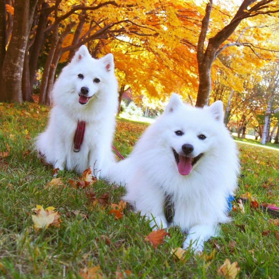 犬と秋に行きたい紅葉が楽しめるお出かけスポット北海道南区の真駒内公園