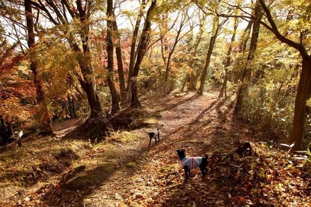 犬と秋に行きたい紅葉が楽しめるお出かけスポット埼玉県にある関八州見晴台