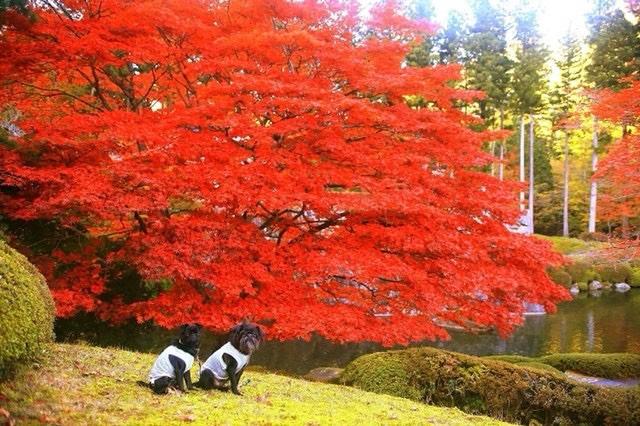 犬と秋に行きたい紅葉が楽しめるお出かけスポットの栃木県の古峰神社