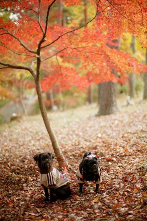 犬と秋に行きたい紅葉が楽しめるお出かけスポット埼玉県にある森林公園