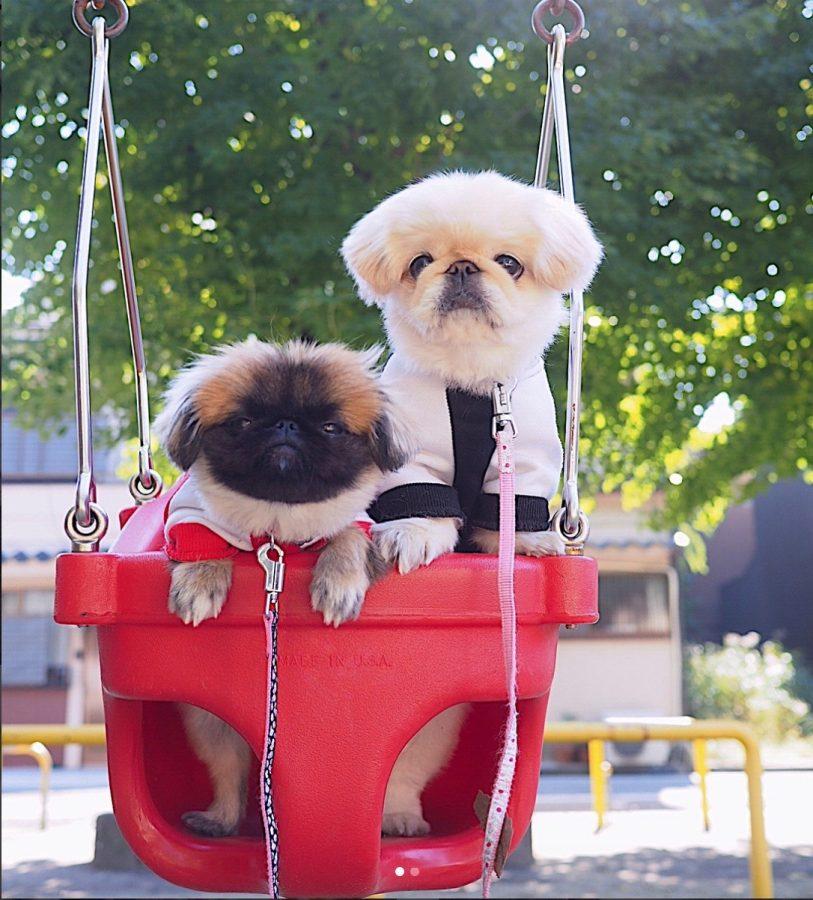 お散歩中に遊ぶ二匹の犬