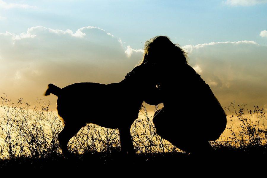 夕日の中の犬と女性