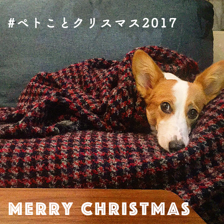 ペトことクリスマスフォトコンテスト