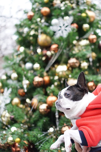 犬とのクリスマス