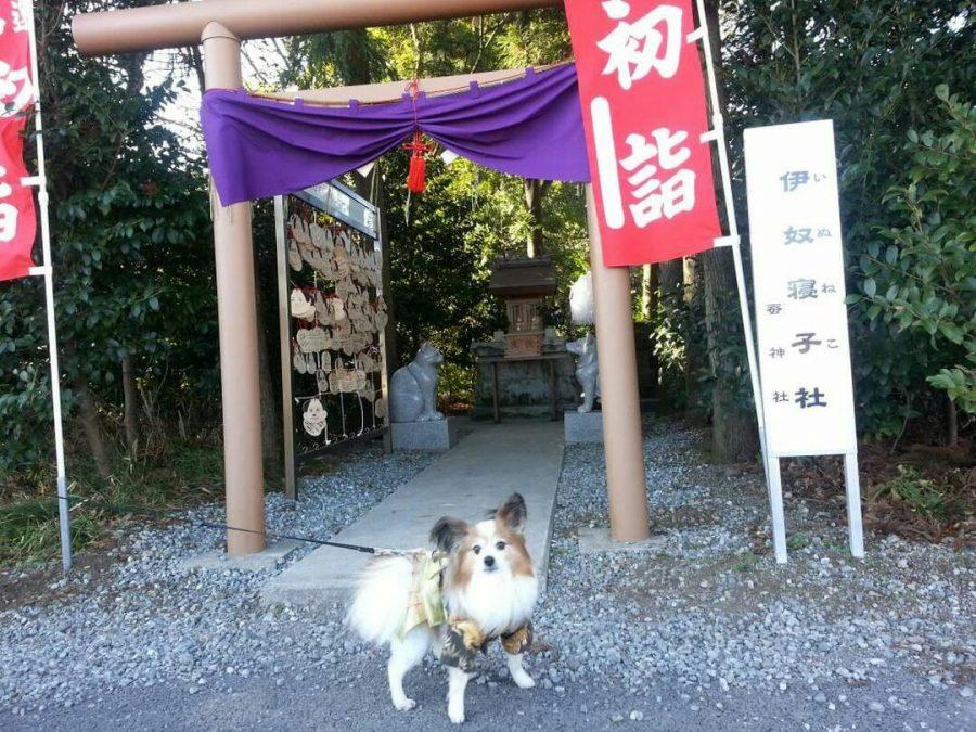 ペットと参拝できる神社の座間神社
