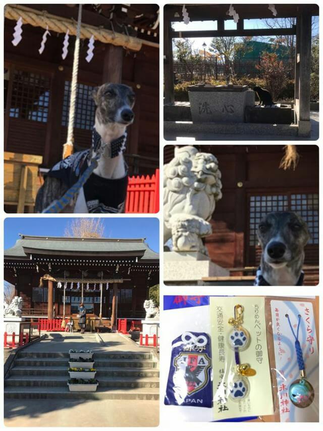 ペットと参拝できる神社の朝日氷川神社
