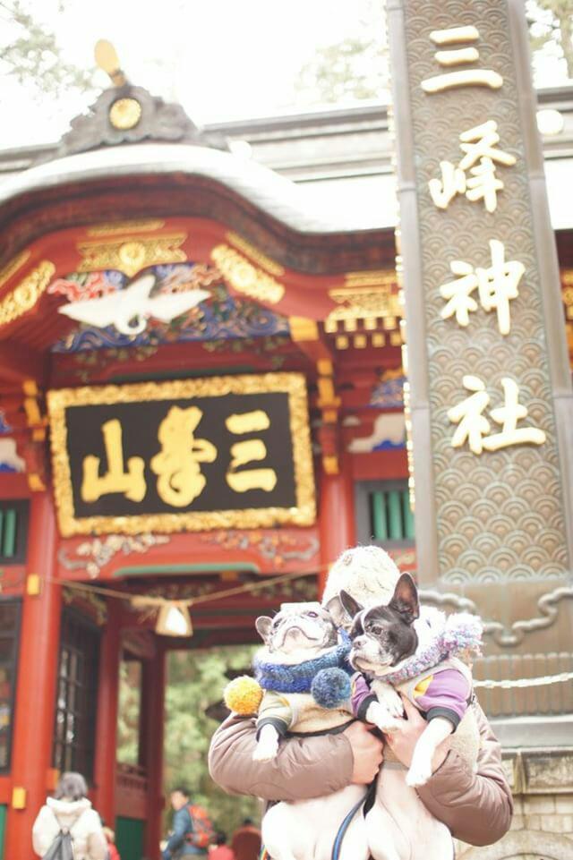ペットと参拝できる神社の三峯神社