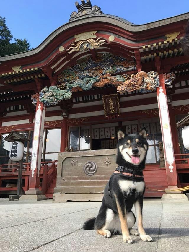 ペットと参拝できる神社の大前神社