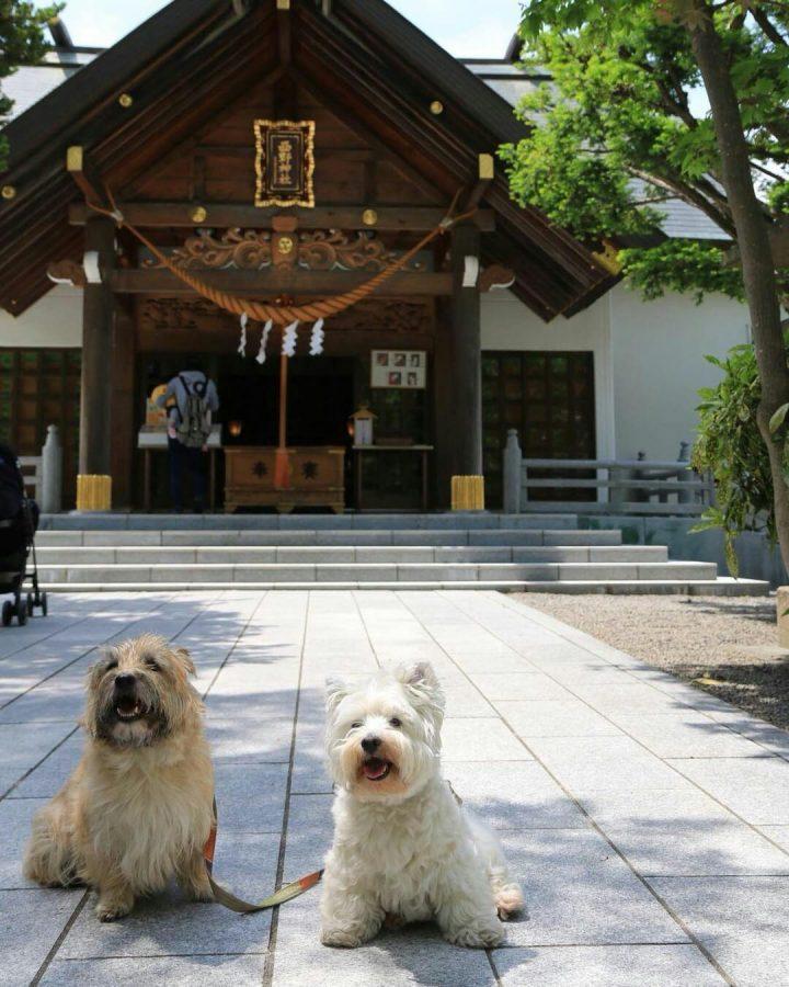 ペットと参拝できる神社の西野神社