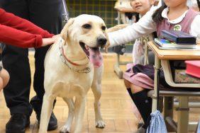 犬を通して「他者」の命に思いを寄せてほしかった――立教女学院小学校、16年目の動物介在教育