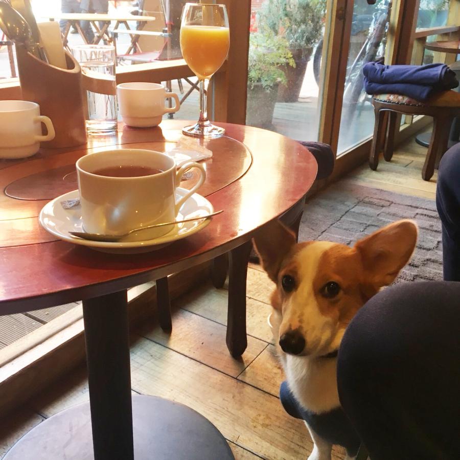 犬同伴可のドッグカフェhikicafe
