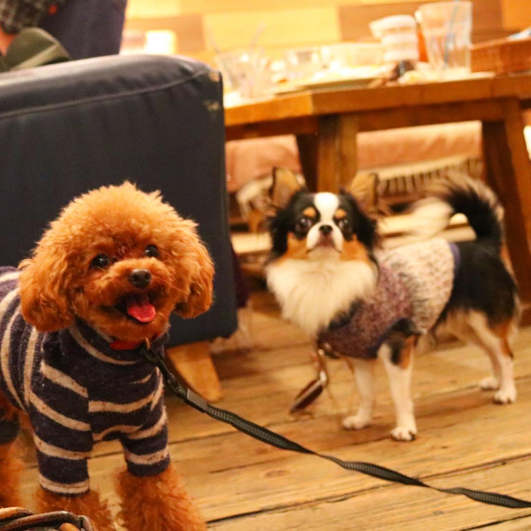 渋谷のドッグカフェのボンダイカフェ