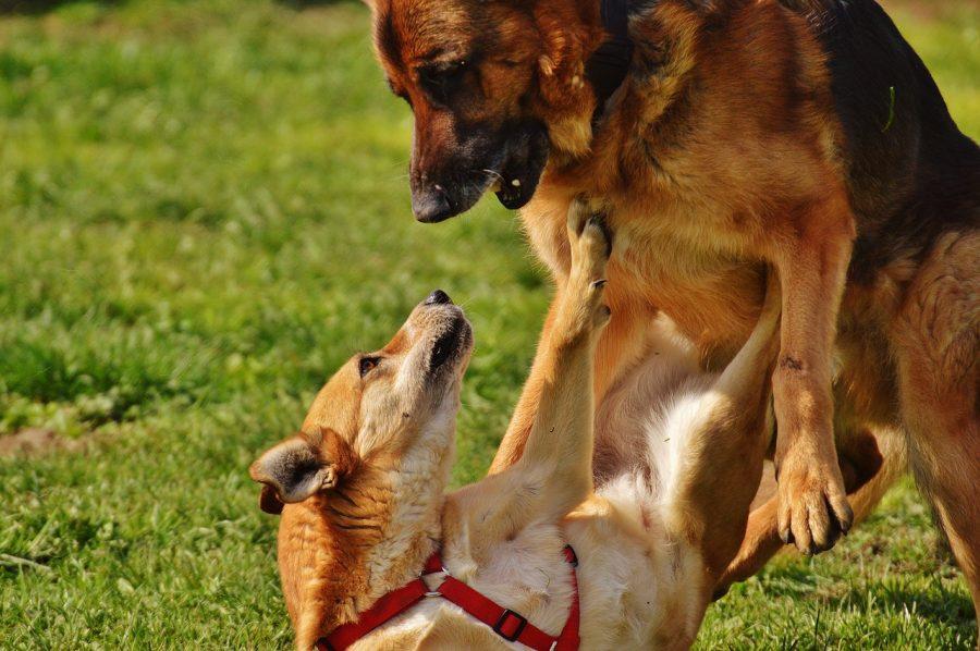 喧嘩してる犬