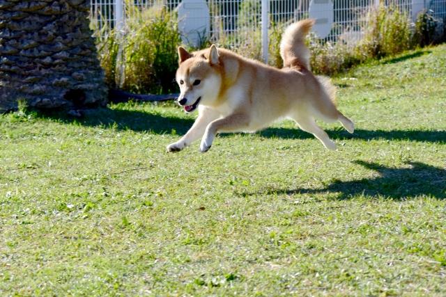 元気に走り回る犬