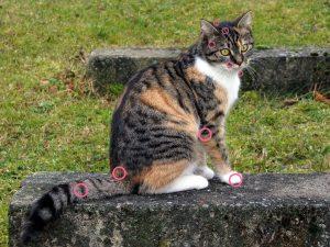 帰宅時やお風呂上がりに猫が頻繁に頭突きするのはなぜ?